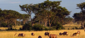 5 Days Uganda Family Safari & City Tour