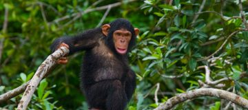 3 Days Kibale Forest Tour